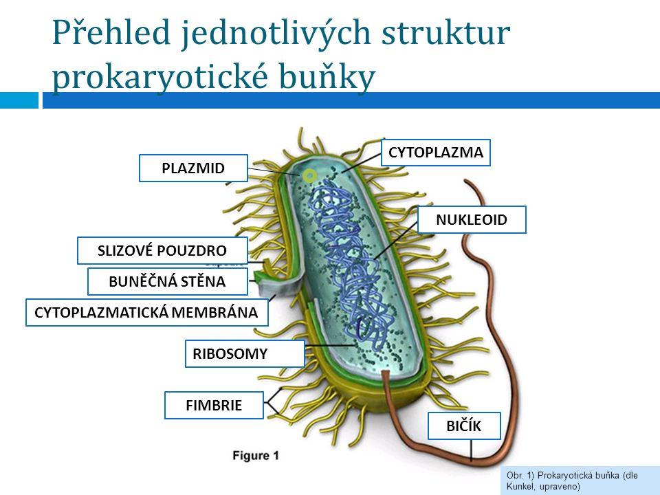 Přehled jednotlivých struktur prokaryotické buňky NUKLEOID BIČÍK BUNĚČNÁ STĚNA CYTOPLAZMATICKÁ MEMBRÁNA RIBOSOMY FIMBRIE SLIZOVÉ POUZDRO Obr. 1) Proka