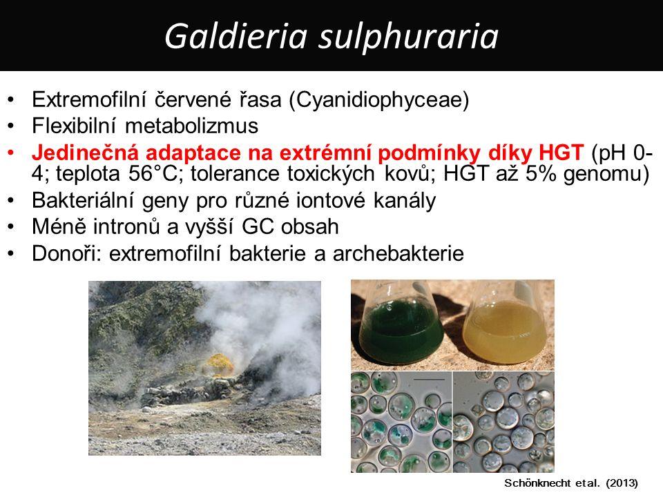 Extremofilní červené řasa (Cyanidiophyceae) Flexibilní metabolizmus Jedinečná adaptace na extrémní podmínky díky HGT (pH 0- 4; teplota 56°C; tolerance toxických kovů; HGT až 5% genomu) Bakteriální geny pro různé iontové kanály Méně intronů a vyšší GC obsah Donoři: extremofilní bakterie a archebakterie Schönknecht et al.