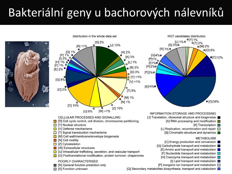 Bakteriální geny u bachorových nálevníků