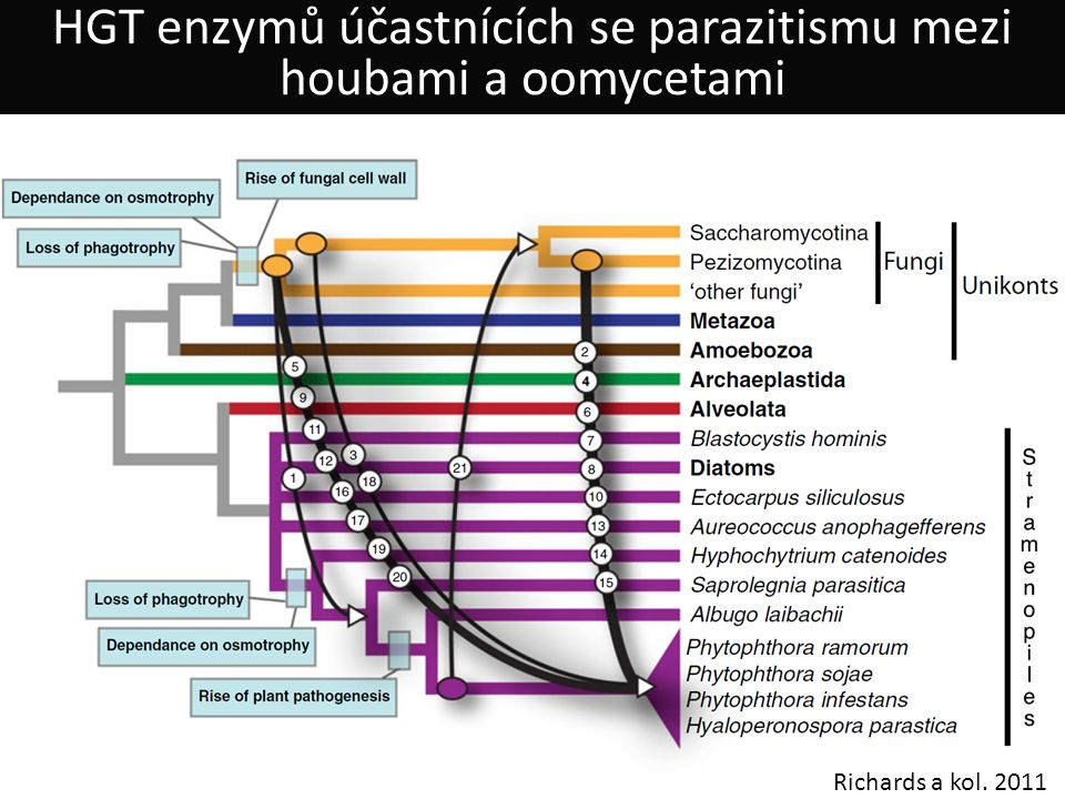 Richards a kol. 2011 HGT enzymů účastnících se parazitismu mezi houbami a oomycetami