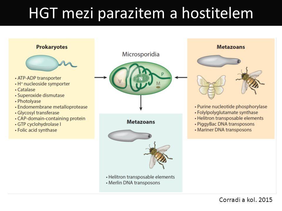 HGT mezi parazitem a hostitelem Corradi a kol. 2015