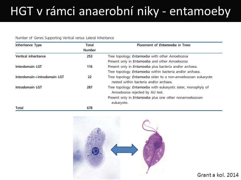 HGT v rámci anaerobní niky - entamoeby Grant a kol. 2014
