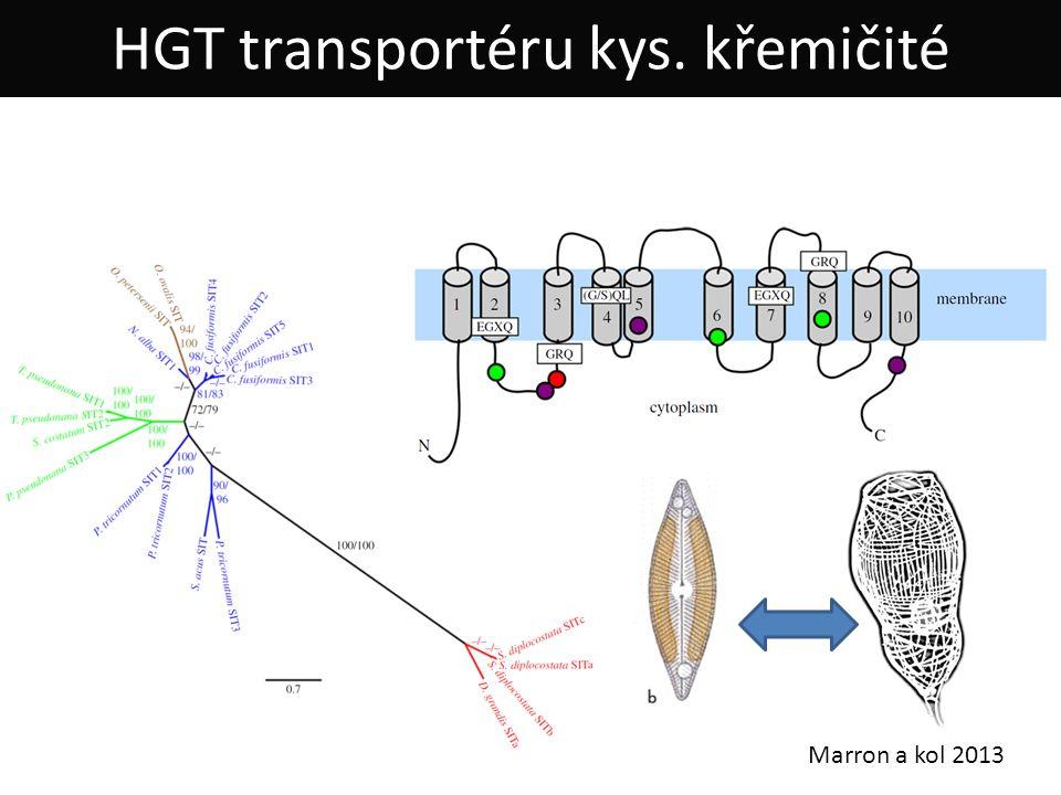 Marron a kol 2013 HGT transportéru kys. křemičité