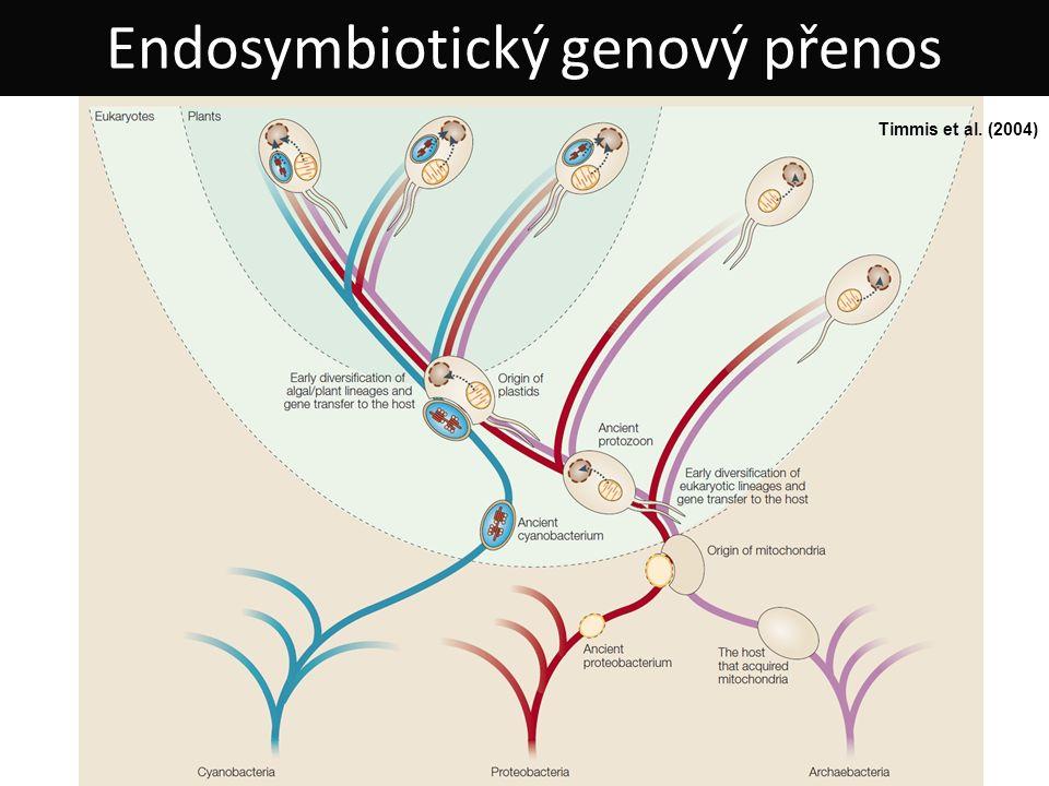 Endosymbiotický genový přenos Timmis et al. (2004)