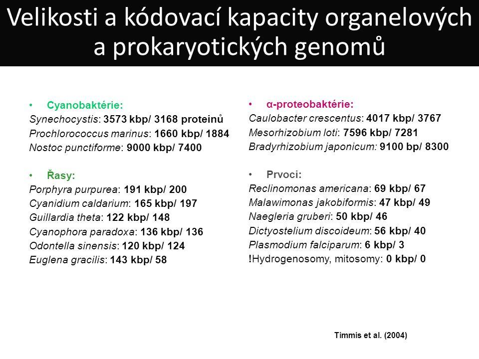 Cyanobaktérie: Synechocystis: 3573 kbp/ 3168 proteinů Prochlorococcus marinus: 1660 kbp/ 1884 Nostoc punctiforme: 9000 kbp/ 7400 Řasy: Porphyra purpurea: 191 kbp/ 200 Cyanidium caldarium: 165 kbp/ 197 Guillardia theta: 122 kbp/ 148 Cyanophora paradoxa: 136 kbp/ 136 Odontella sinensis: 120 kbp/ 124 Euglena gracilis: 143 kbp/ 58 α-proteobaktérie: Caulobacter crescentus: 4017 kbp/ 3767 Mesorhizobium loti: 7596 kbp/ 7281 Bradyrhizobium japonicum: 9100 bp/ 8300 Prvoci: Reclinomonas americana: 69 kbp/ 67 Malawimonas jakobiformis: 47 kbp/ 49 Naegleria gruberi: 50 kbp/ 46 Dictyostelium discoideum: 56 kbp/ 40 Plasmodium falciparum: 6 kbp/ 3 !Hydrogenosomy, mitosomy: 0 kbp/ 0 Timmis et al.