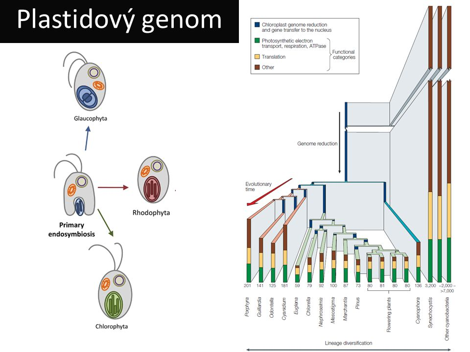 Plastidový genom