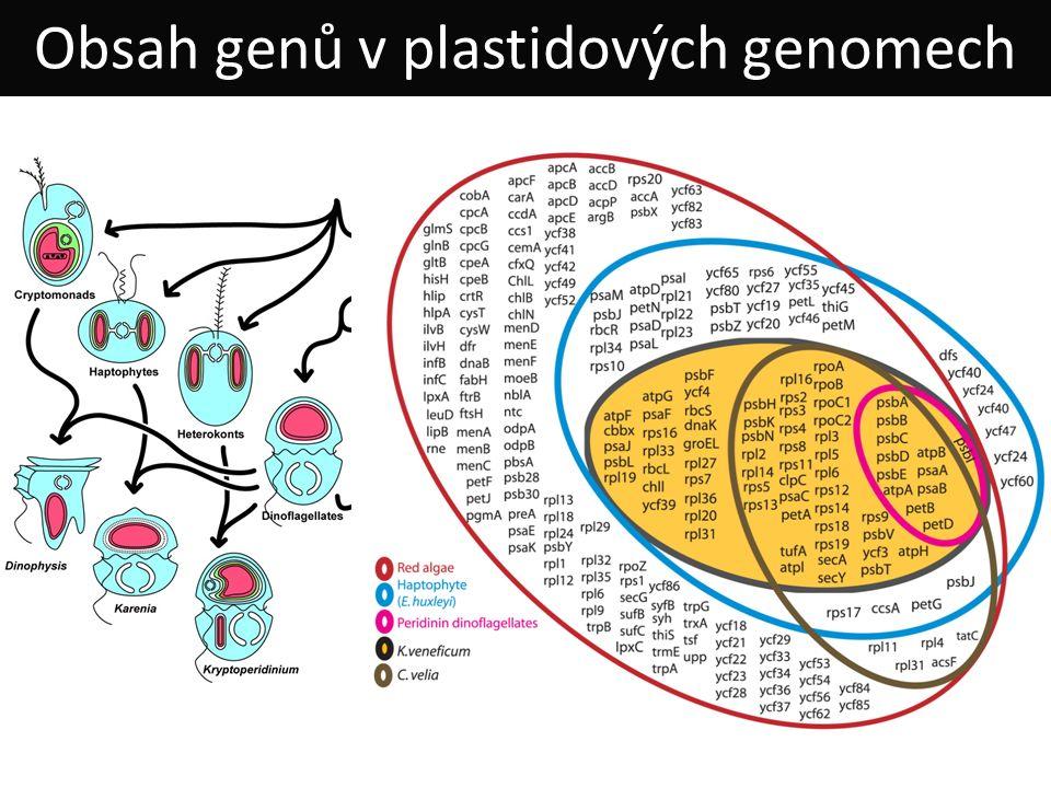 Obsah genů v plastidových genomech