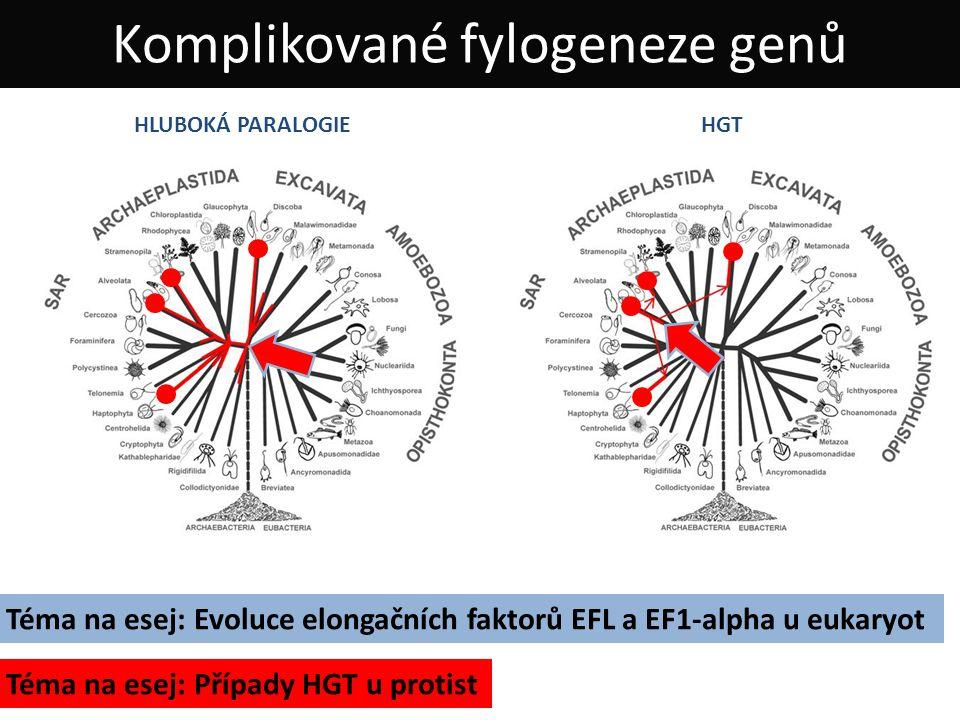 Komplikované fylogeneze genů HLUBOKÁ PARALOGIEHGT Téma na esej: Evoluce elongačních faktorů EFL a EF1-alpha u eukaryot Téma na esej: Případy HGT u protist