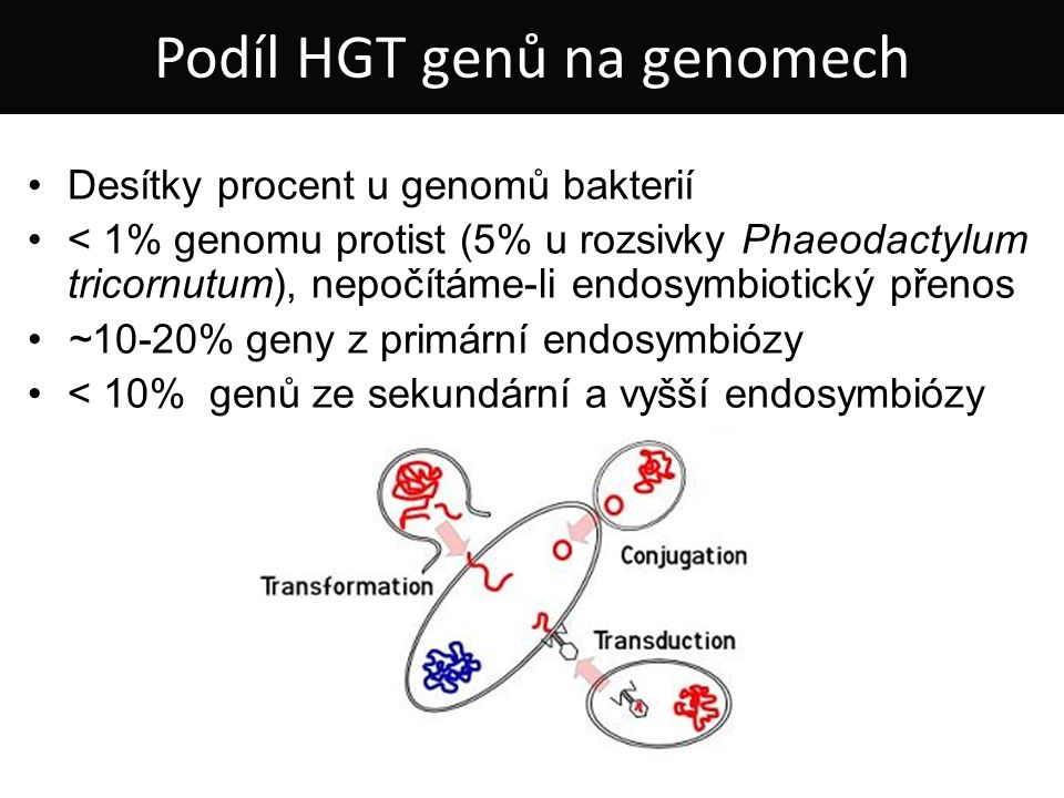 Desítky procent u genomů bakterií < 1% genomu protist (5% u rozsivky Phaeodactylum tricornutum), nepočítáme-li endosymbiotický přenos ~10-20% geny z primární endosymbiózy < 10% genů ze sekundární a vyšší endosymbiózy Podíl HGT genů na genomech