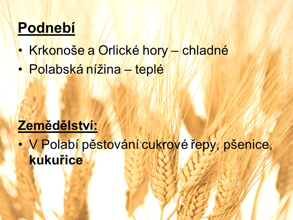 Podnebí Krkonoše a Orlické hory – chladné Polabská nížina – teplé Zemědělství: V Polabí pěstování cukrové řepy, pšenice, kukuřice