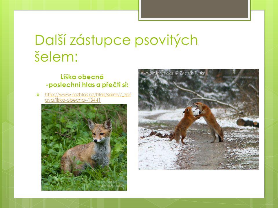 Další zástupce psovitých šelem: Liška obecná -poslechni hlas a přečti si:  http://www.rozhlas.cz/hlas/selmy/_zpr ava/liska-obecna--13441 http://www.rozhlas.cz/hlas/selmy/_zpr ava/liska-obecna--13441
