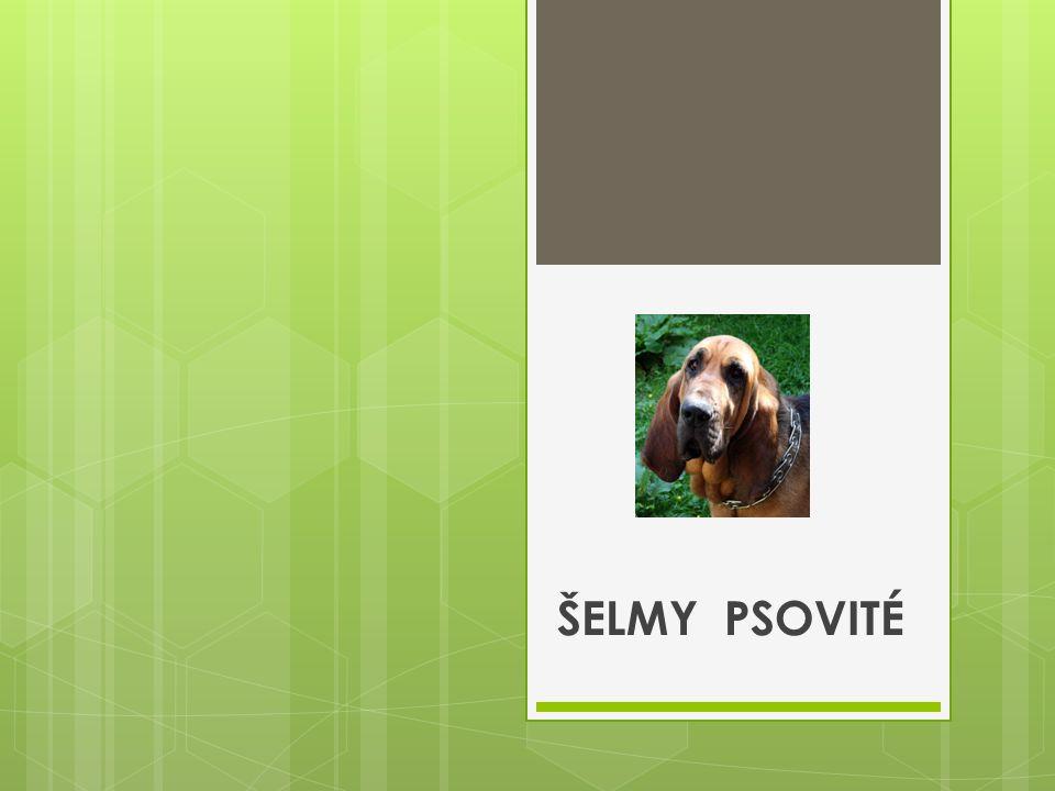 Plemena pro potěšení:  Pudl  Pekingský palácový psík  Čau-čau  Dalmatin  Čivava  A další