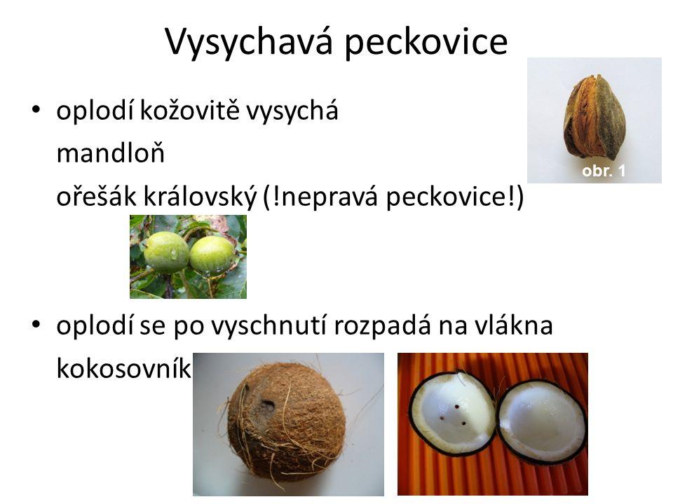 Vysychavá peckovice oplodí kožovitě vysychá mandloň ořešák královský (!nepravá peckovice!) oplodí se po vyschnutí rozpadá na vlákna kokosovník obr. 1
