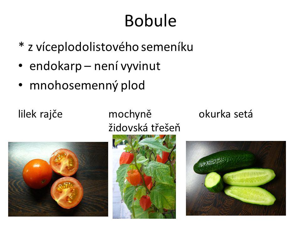 Bobule * z víceplodolistového semeníku endokarp – není vyvinut mnohosemenný plod lilek rajčemochyně okurka setá židovská třešeň