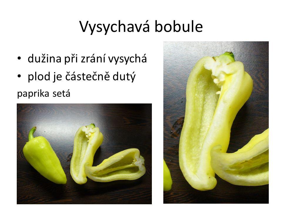 Vysychavá bobule dužina při zrání vysychá plod je částečně dutý paprika setá