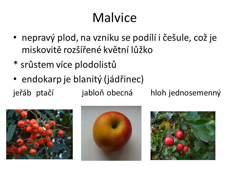Malvice nepravý plod, na vzniku se podílí i češule, což je miskovitě rozšířené květní lůžko * srůstem více plodolistů endokarp je blanitý (jádřinec) j
