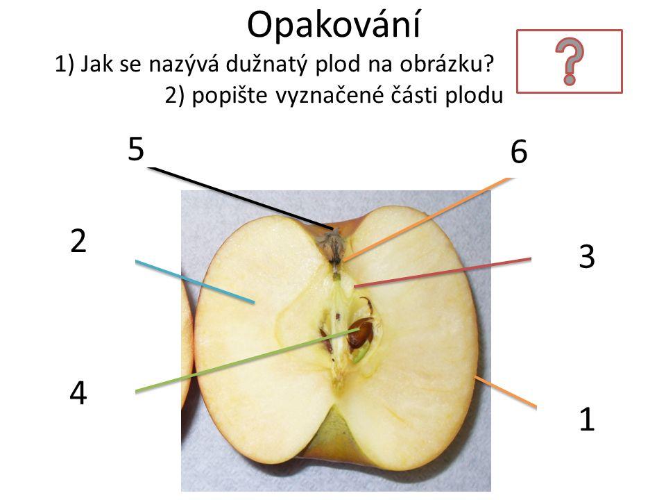 Opakování 1) Jak se nazývá dužnatý plod na obrázku?MALVICE 2) popište vyznačené části plodu exokarp mezokarp endokarp semena zbytek kalichu zbytek čně