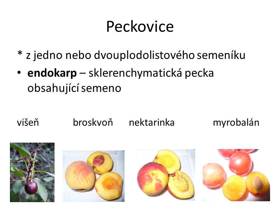 Peckovice * z jedno nebo dvouplodolistového semeníku endokarp – sklerenchymatická pecka obsahující semeno višeňbroskvoňnektarinka myrobalán