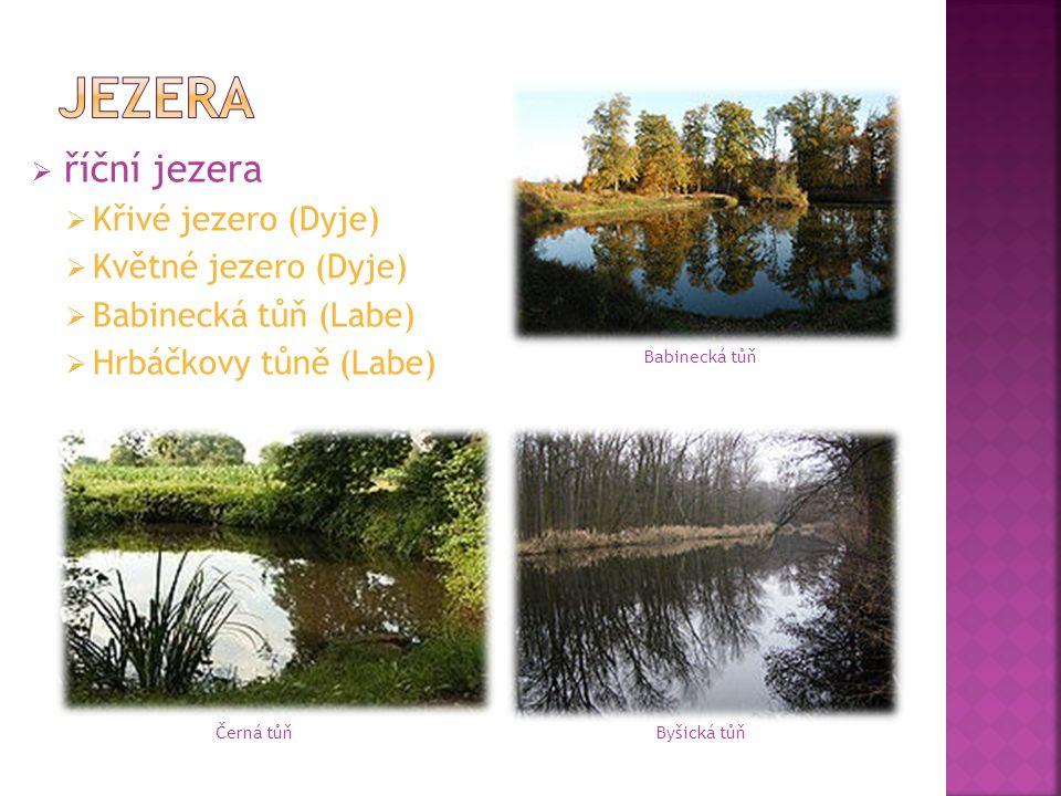  říční jezera  Křivé jezero (Dyje)  Květné jezero (Dyje)  Babinecká tůň (Labe)  Hrbáčkovy tůně (Labe) Babinecká tůň Černá tůňByšická tůň