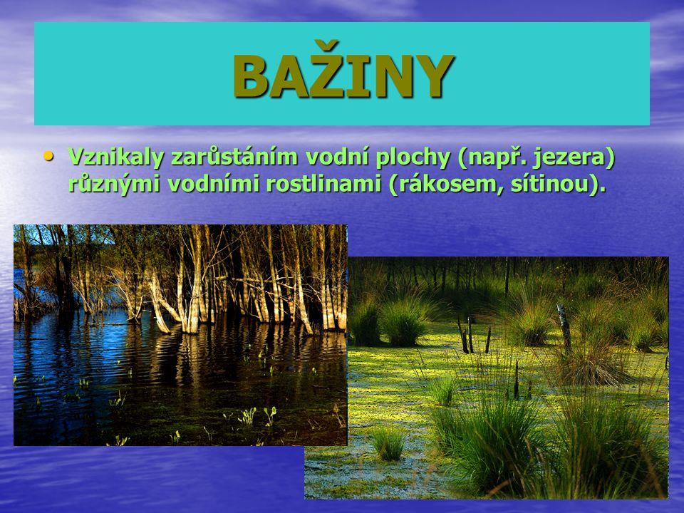 BAŽINY Vznikaly zarůstáním vodní plochy (např. jezera) různými vodními rostlinami (rákosem, sítinou). Vznikaly zarůstáním vodní plochy (např. jezera)
