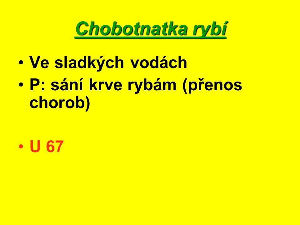 Pijavka lékařská Ve sladkých vodách Ve středověku využívána k odsáváním krve nemocným http://www.zdraviprirody.cz/zdraviprirody/eshop/38-1-PRODUKTY-s-