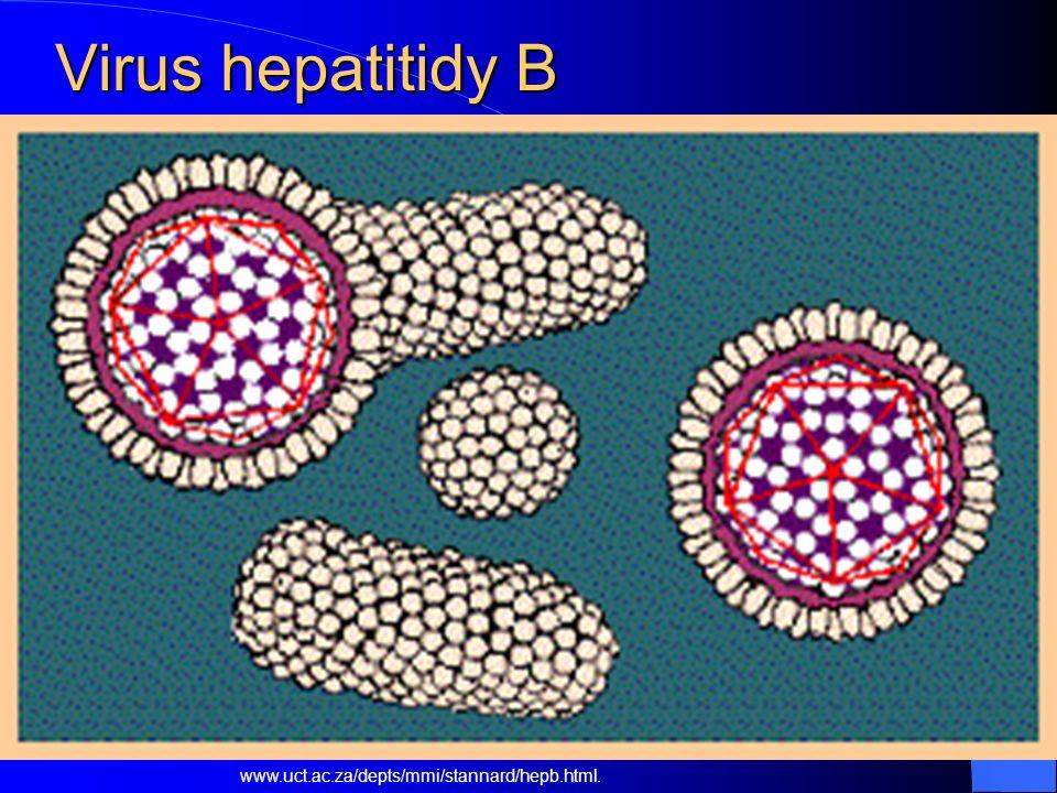Virus hepatitidy B www.uct.ac.za/depts/mmi/stannard/hepb.html.