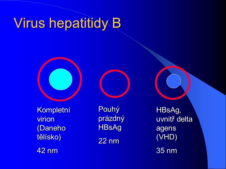 Virus hepatitidy B Kompletní virion (Daneho tělísko) 42 nm Pouhý prázdný HBsAg 22 nm HBsAg, uvnitř delta agens (VHD) 35 nm