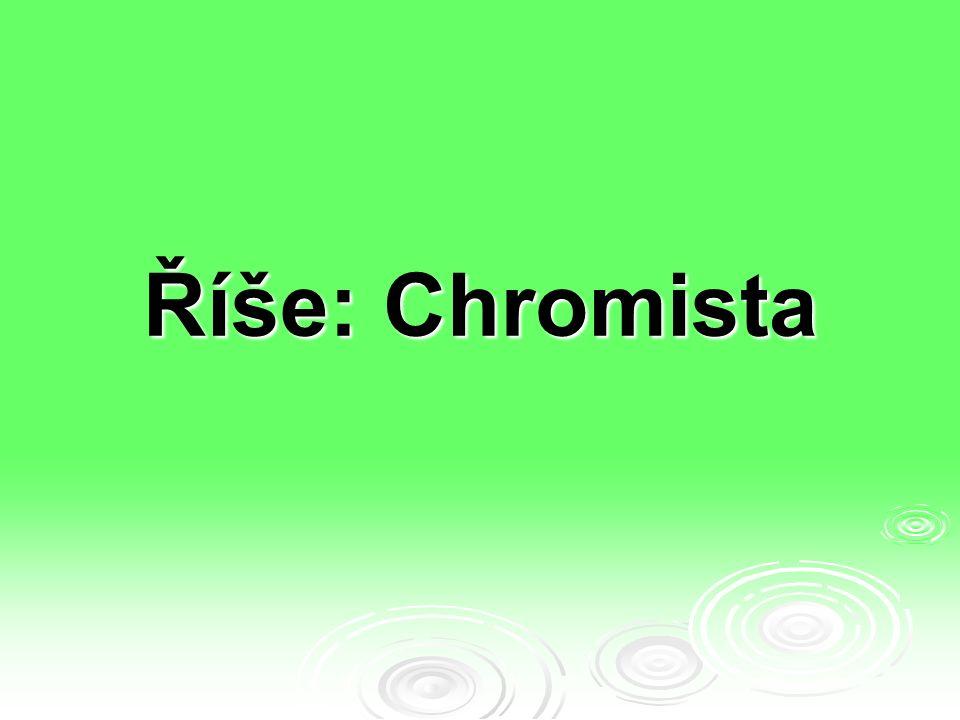 Říše: Chromista