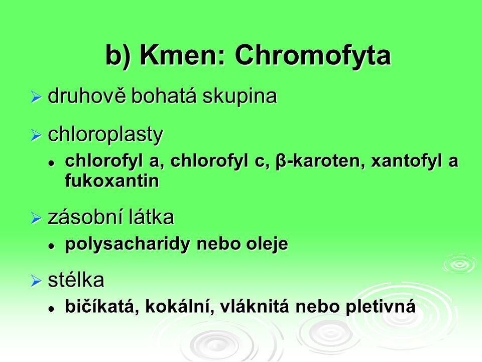 b) Kmen: Chromofyta  druhově bohatá skupina  chloroplasty chlorofyl a, chlorofyl c, β-karoten, xantofyl a fukoxantin chlorofyl a, chlorofyl c, β-kar
