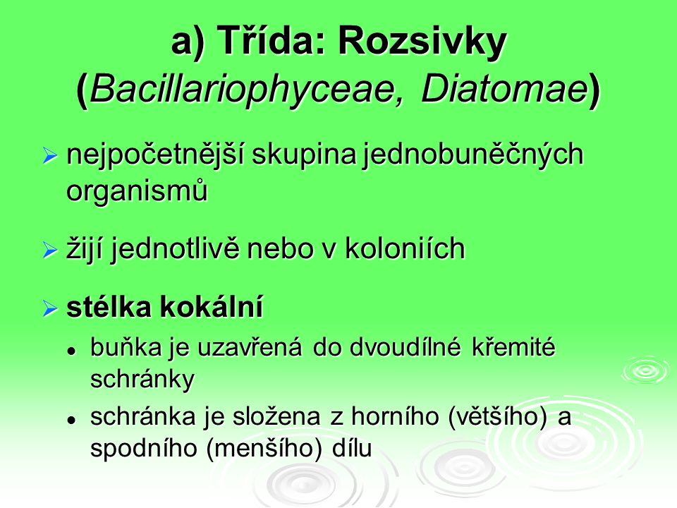 a) Třída: Rozsivky (Bacillariophyceae, Diatomae)  nejpočetnější skupina jednobuněčných organismů  žijí jednotlivě nebo v koloniích  stélka kokální