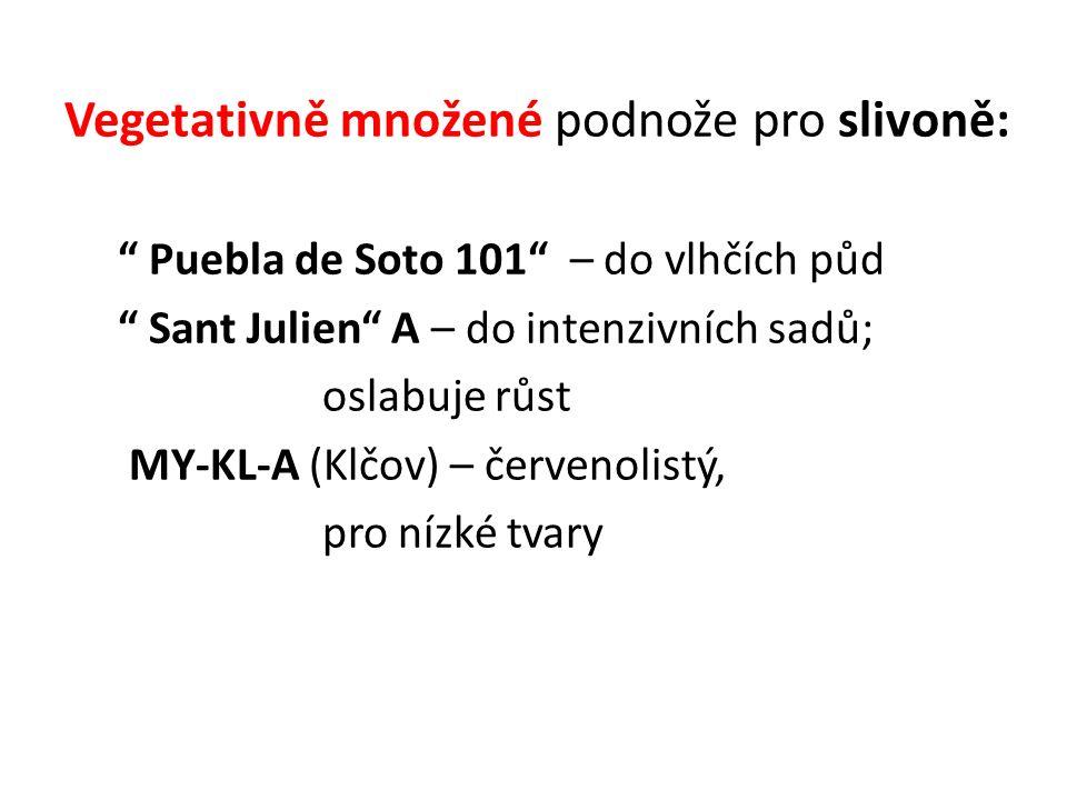 """Vegetativně množené podnože pro slivoně: """" Puebla de Soto 101"""" – do vlhčích půd """" Sant Julien"""" A – do intenzivních sadů; oslabuje růst MY-KL-A (Klčov)"""