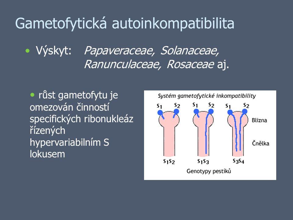 Gametofytická autoinkompatibilita Výskyt:Papaveraceae, Solanaceae, Ranunculaceae, Rosaceae aj.