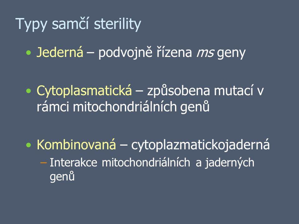 Typy samčí sterility Jederná – podvojně řízena ms geny Cytoplasmatická – způsobena mutací v rámci mitochondriálních genů Kombinovaná – cytoplazmatickojaderná –Interakce mitochondriálních a jaderných genů