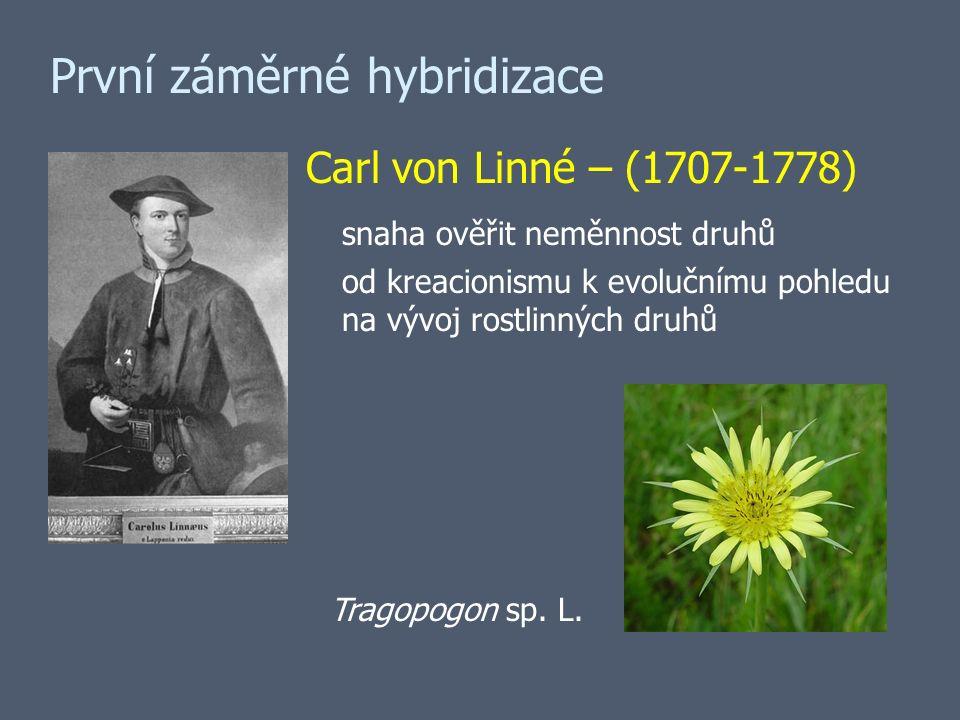 První záměrné hybridizace Carl von Linné – (1707-1778) snaha ověřit neměnnost druhů od kreacionismu k evolučnímu pohledu na vývoj rostlinných druhů Tragopogon sp.