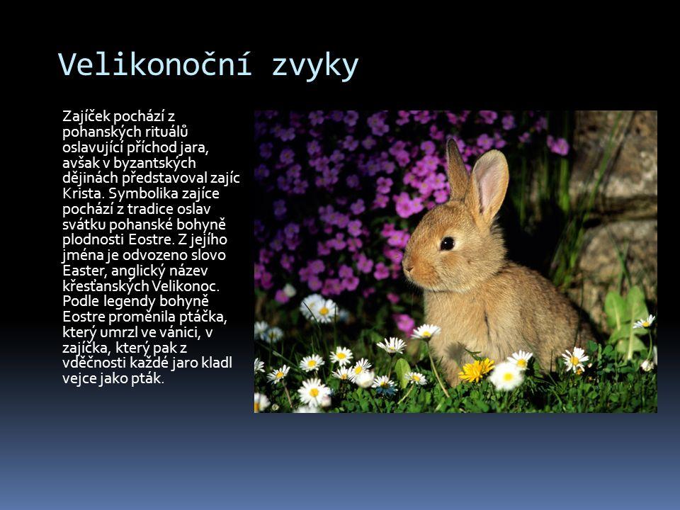 Velikonoční zvyky Zajíček pochází z pohanských rituálů oslavující příchod jara, avšak v byzantských dějinách představoval zajíc Krista. Symbolika zají
