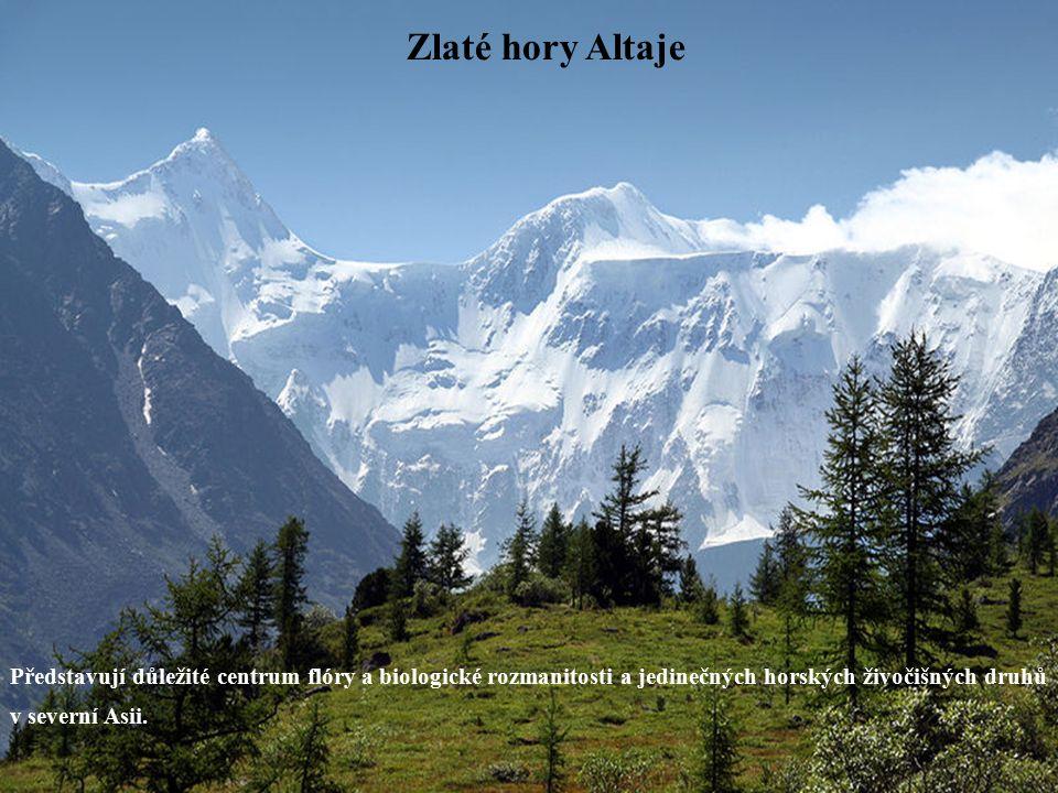 Zlaté hory Altaje Představují důležité centrum flóry a biologické rozmanitosti a jedinečných horských živočišných druhů v severní Asii.