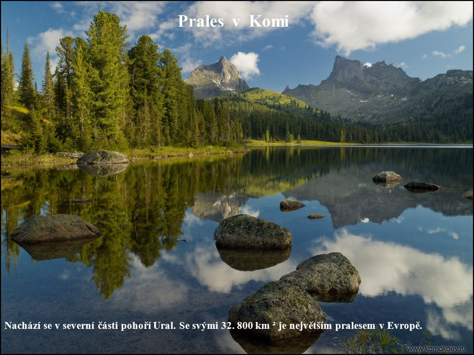 Prales v Komi Nachází se v severní části pohoří Ural. Se svými 32. 800 km ² je největším pralesem v Evropě.