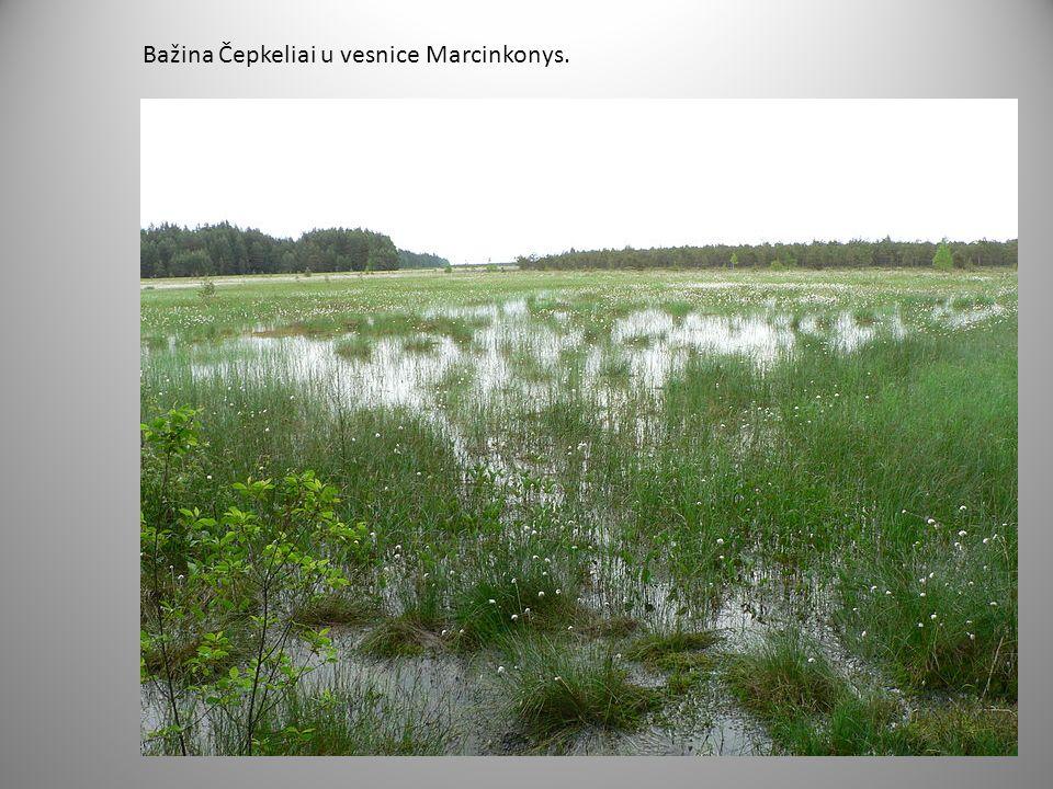 Bažina Čepkeliai u vesnice Marcinkonys.