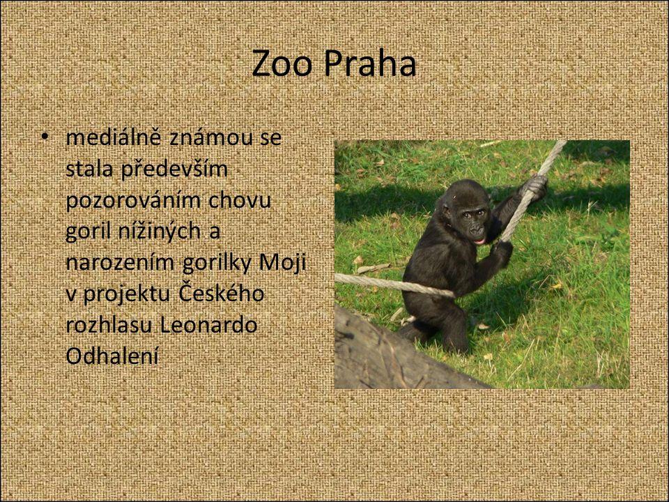 Zoo Praha mediálně známou se stala především pozorováním chovu goril nížiných a narozením gorilky Moji v projektu Českého rozhlasu Leonardo Odhalení