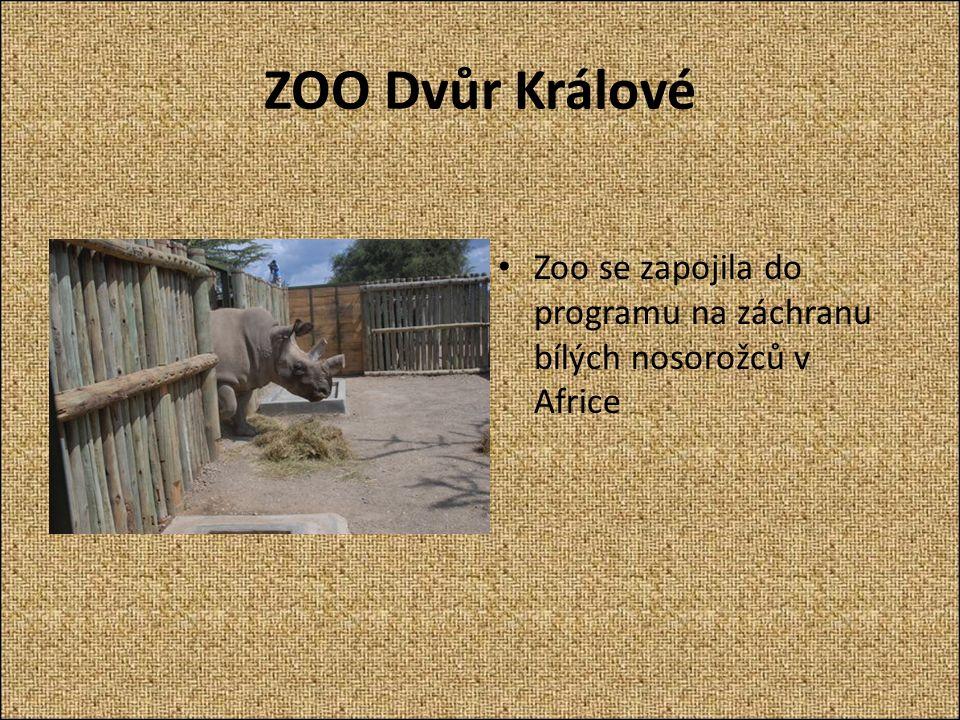 ZOO Dvůr Králové Zoo se zapojila do programu na záchranu bílých nosorožců v Africe
