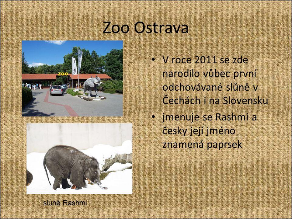 Zoo Ostrava V roce 2011 se zde narodilo vůbec první odchovávané slůně v Čechách i na Slovensku jmenuje se Rashmi a česky její jméno znamená paprsek slůně Rashmi