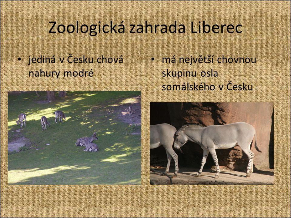 Zoologická zahrada Liberec jediná v Česku chová nahury modré má největší chovnou skupinu osla somálského v Česku