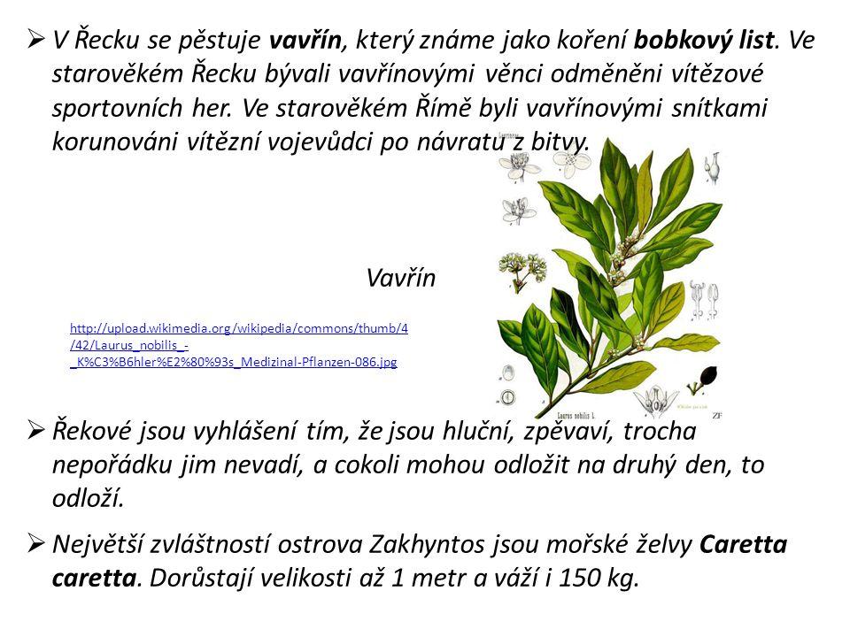  V Řecku se pěstuje vavřín, který známe jako koření bobkový list.