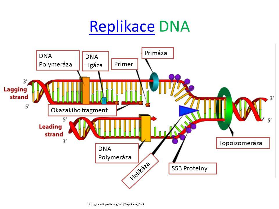 ReplikaceReplikace DNA Primáza Primer DNA Ligáza DNA Polymeráza Okazakiho fragment Topoizomeráza DNA Polymeráza Helikáza SSB Proteiny http://cs.wikipedia.org/wiki/Replikace_DNA