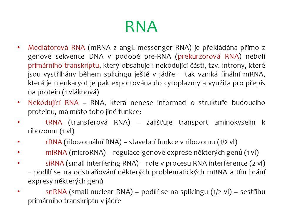 RNA Mediátorová RNA (mRNA z angl. messenger RNA) je překládána přímo z genové sekvence DNA v podobě pre-RNA (prekurzorová RNA) neboli primárního trans