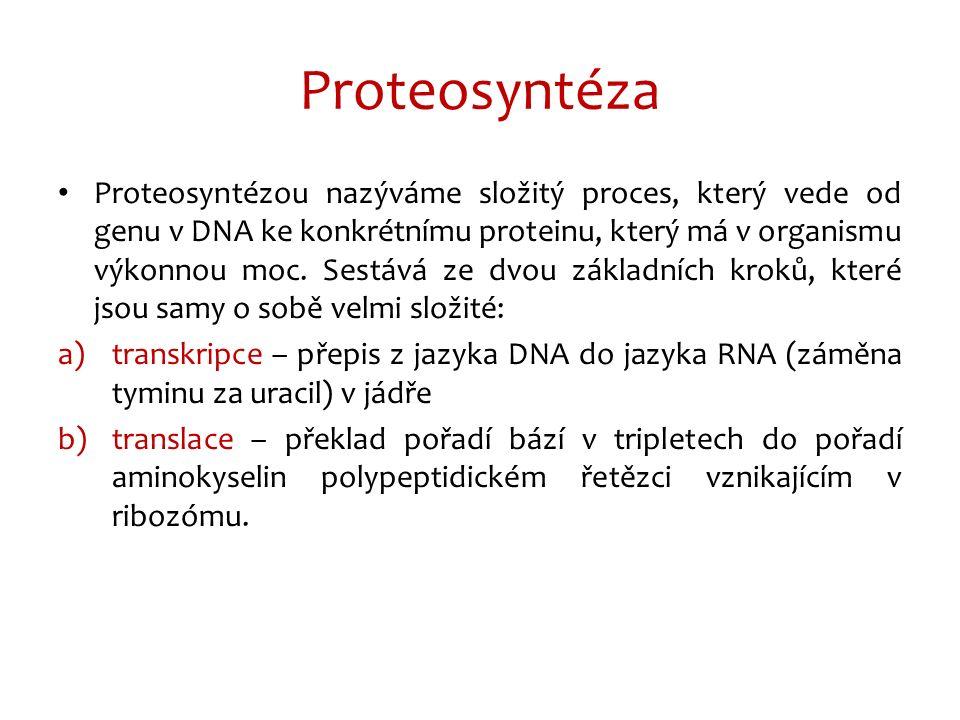 Proteosyntéza Proteosyntézou nazýváme složitý proces, který vede od genu v DNA ke konkrétnímu proteinu, který má v organismu výkonnou moc.