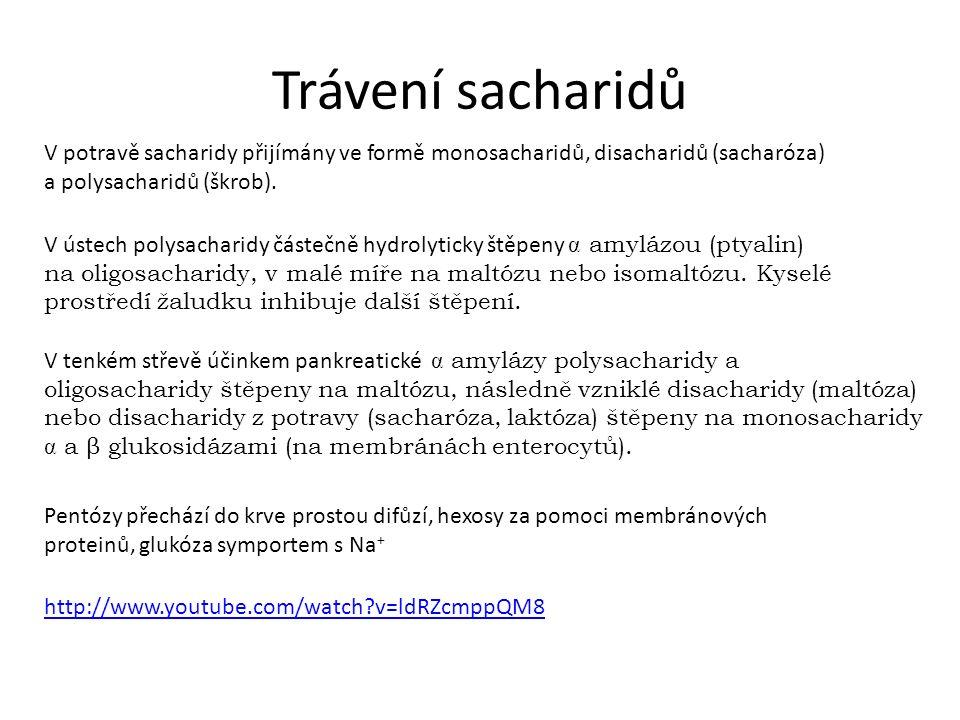 Trávení sacharidů V potravě sacharidy přijímány ve formě monosacharidů, disacharidů (sacharóza) a polysacharidů (škrob).