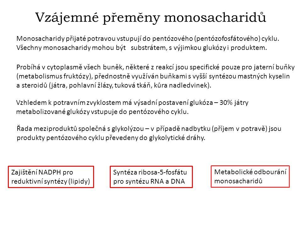 Vzájemné přeměny monosacharidů Monosacharidy přijaté potravou vstupují do pentózového (pentózofosfátového) cyklu.