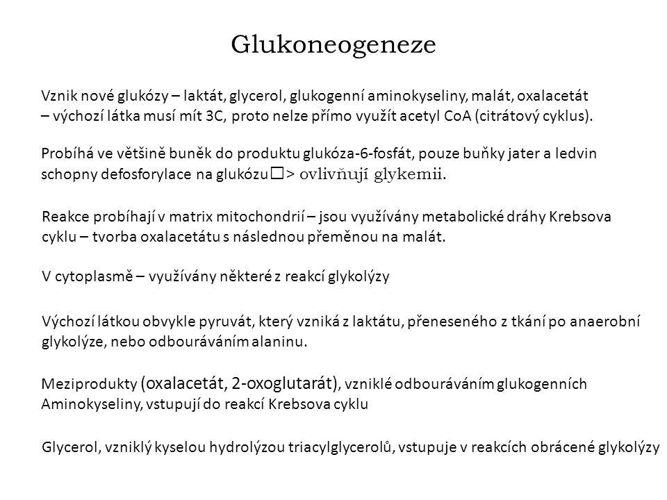 Glukoneogeneze Vznik nové glukózy – laktát, glycerol, glukogenní aminokyseliny, malát, oxalacetát – výchozí látka musí mít 3C, proto nelze přímo využít acetyl CoA (citrátový cyklus).