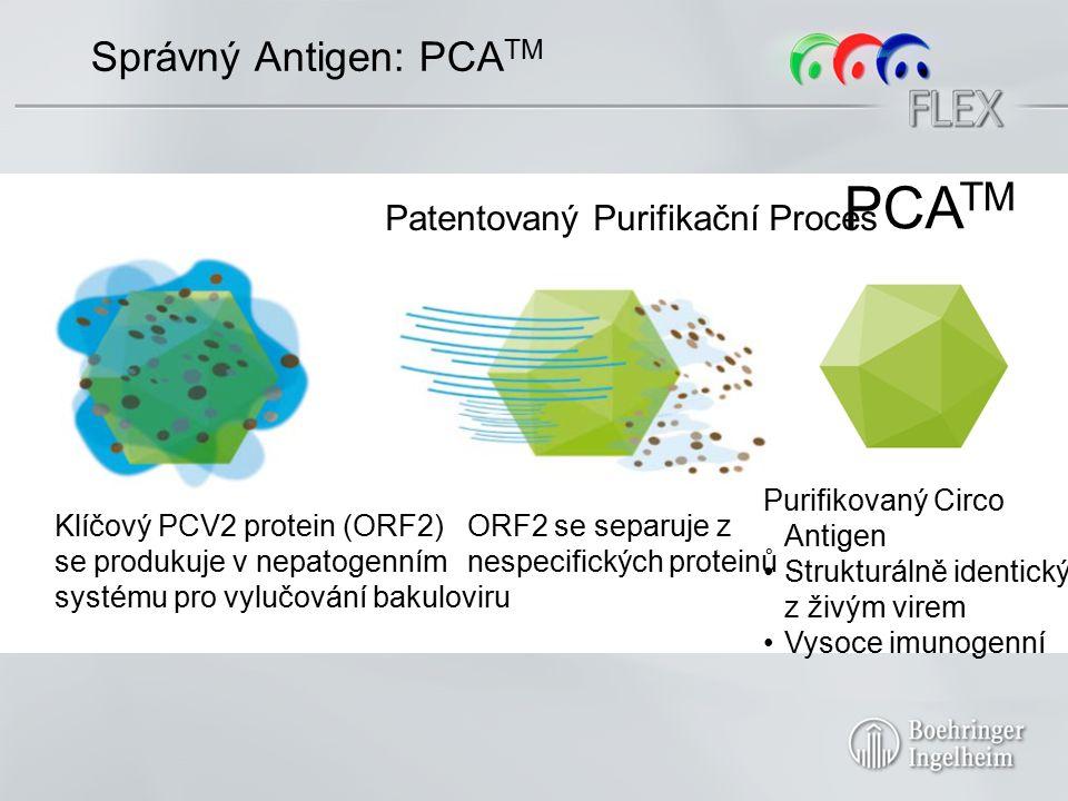 Správný Antigen: PCA TM Klíčový PCV2 protein (ORF2) se produkuje v nepatogenním systému pro vylučování bakuloviru Patentovaný Purifikační Proces ORF2 se separuje z nespecifických proteinů PCA TM Purifikovaný Circo Antigen Strukturálně identický z živým virem Vysoce imunogenní